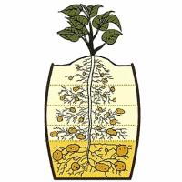 способы посадки картофеля в мешках