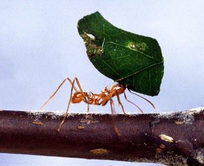 Как вывести муравьев в квартире и на даче