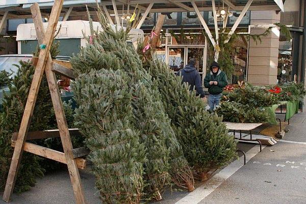 как выбрать елку к новому году