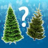 какую елку выбрать на новый год